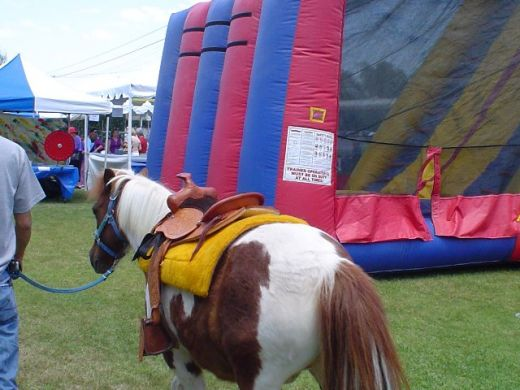 Party Ponies & Pony Ride Hire